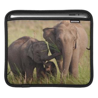 Indian Asian Elephant family in the savannah Sleeve For iPads