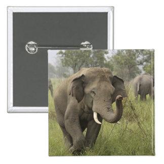 Indian / Asian Elephant greeting,Corbett Button