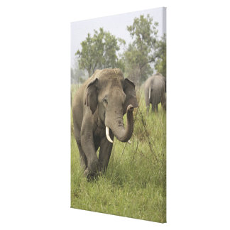 Indian / Asian Elephant greeting,Corbett Stretched Canvas Print