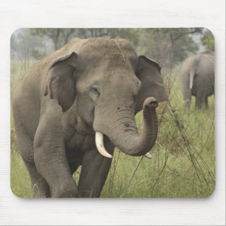Indian / Asian Elephant greeting,Corbett Mouse Pad
