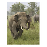 Indian / Asian Elephant greeting,Corbett Postcard