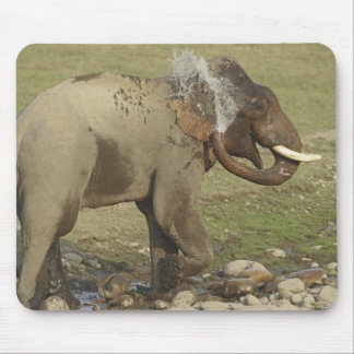 Indian / Asian Elephant spraying water,Corbett Mouse Pad