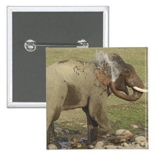 Indian / Asian Elephant spraying water,Corbett Pinback Button