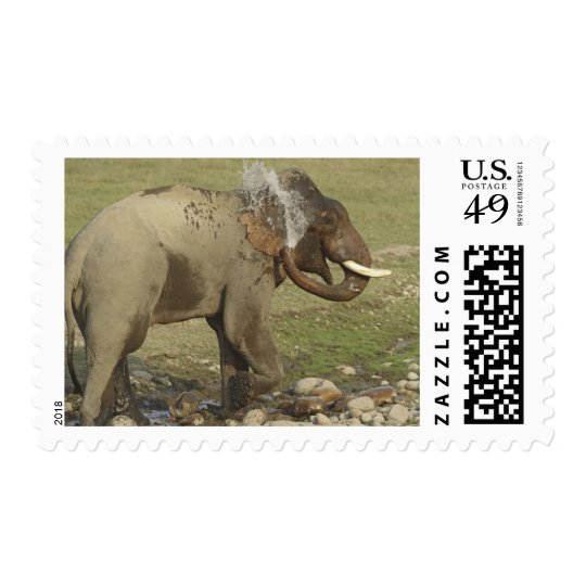 Indian / Asian Elephant spraying water,Corbett Postage