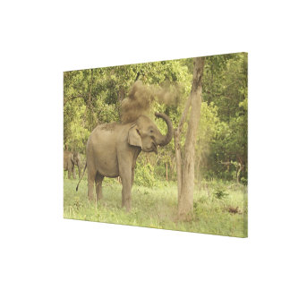 Indian / Asian Elephant taking dust bath,Corbett Gallery Wrapped Canvas