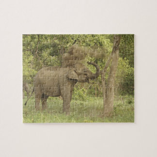 Indian / Asian Elephant taking dust bath,Corbett Jigsaw Puzzle