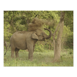 Indian Asian Elephant taking dust bath Corbett Print