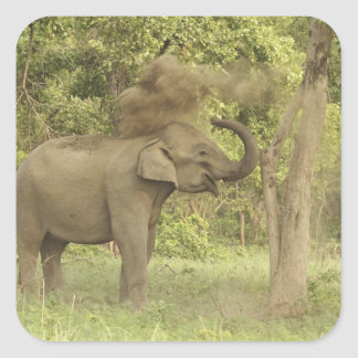 Indian Asian Elephant taking dust bath Corbett Square Sticker