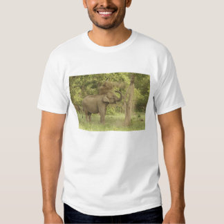 Indian / Asian Elephant taking dust bath,Corbett T Shirt