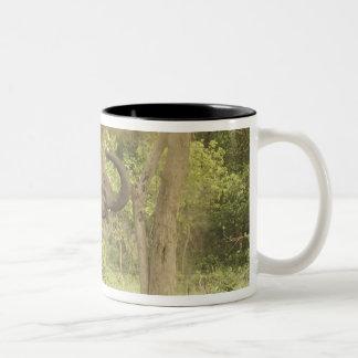 Indian / Asian Elephant taking dust bath,Corbett Two-Tone Coffee Mug