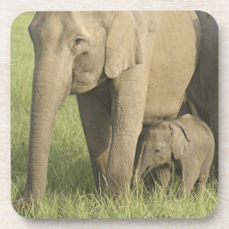 Indian / Asian Elephants and young one,Corbett Beverage Coaster