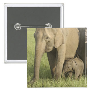 Indian / Asian Elephants and young one,Corbett Button