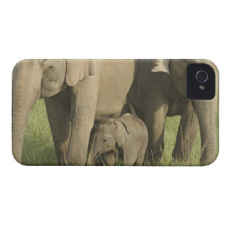 Indian / Asian Elephants and young one,Corbett Case-Mate iPhone 4 Case