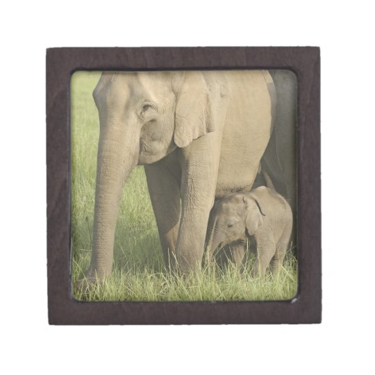 Indian / Asian Elephants and young one,Corbett Jewelry Box