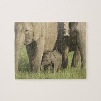 Indian / Asian Elephants and young one,Corbett Puzzle
