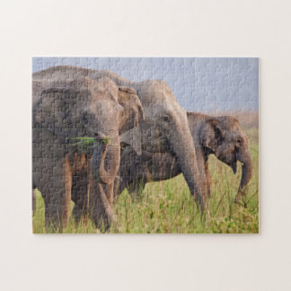 Indian Asian Elephants displaying grass Puzzle
