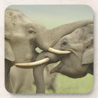 Indian / Asian Elephants play fighting,Corbett 2 Coaster