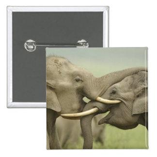 Indian / Asian Elephants play fighting,Corbett 2 Pinback Button