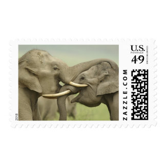 Indian / Asian Elephants play fighting,Corbett 2 Postage Stamps
