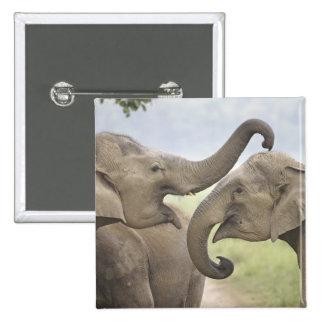 Indian / Asian Elephants play fighting,Corbett 3 Button