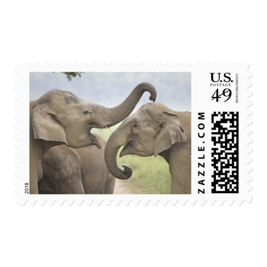 Indian / Asian Elephants play fighting,Corbett 3 Postage