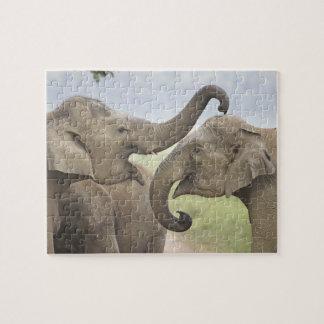 Indian / Asian Elephants play fighting,Corbett 3 Puzzle