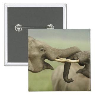 Indian / Asian Elephants play fighting,Corbett Pinback Button