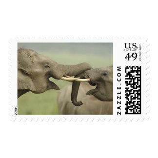 Indian / Asian Elephants play fighting,Corbett Postage