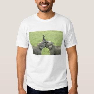 Indian / Asian Elephants play fighting;Corbett T Shirt