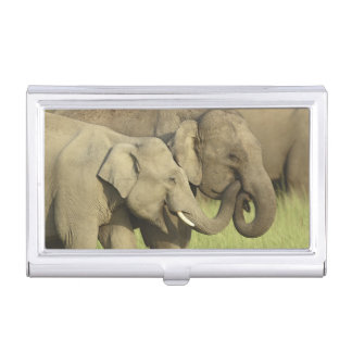 Indian / Asian Elephants sharing a Business Card Holder