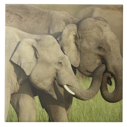 Indian / Asian Elephants sharing a Ceramic Tile