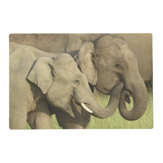 Indian / Asian Elephants sharing a Placemat