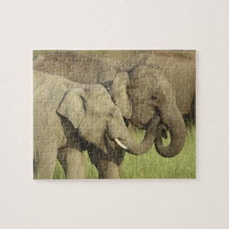 Indian / Asian Elephants sharing a Puzzle