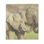 Indian / Asian Elephants sharing a Scratch Pads