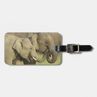 Indian / Asian Elephants sharing a Tags For Luggage