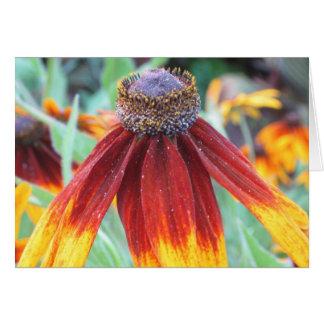Indian Blanket Flower Notecard Greeting Card