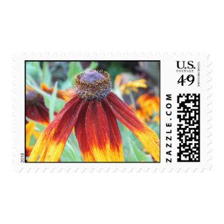 Indian Blanket Flower Postage Stamp