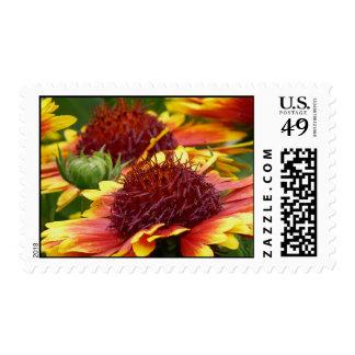 Indian Blanket Flower's Gaillardia pulchella Stamp
