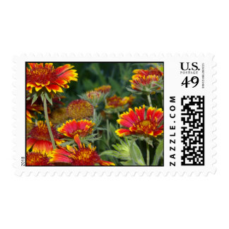 Indian Blanket Stamps