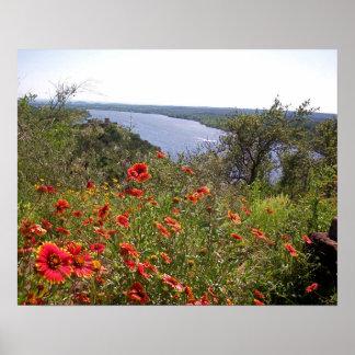 Indian Blanket TX Wildflowers Poster