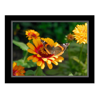 Indian Blanket Wildflower and Butterfly Postcard