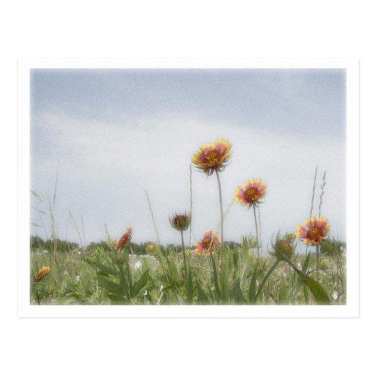 Indian Blanket Wildflower Postcard