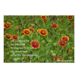 Indian Blanket Wildflowers Colossians 2:7 Poster