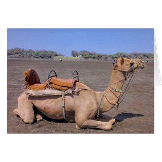 Indian Camel In Gujarat, India Card