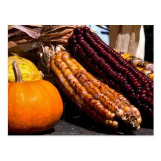 Indian Corn and Pumpkins Postcard