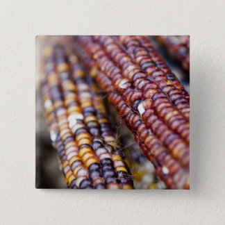 Indian Corn at the Union Square Greenmarket, New Y Button