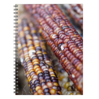 Indian Corn at the Union Square Greenmarket, New Y Notebook