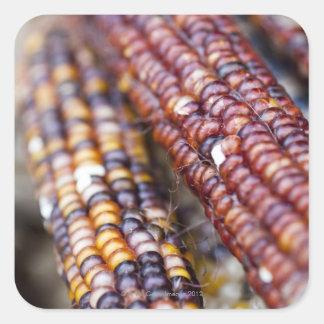 Indian Corn at the Union Square Greenmarket, New Y Square Sticker