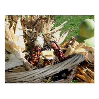 Indian Corn In Basket Nature Photography Postcard