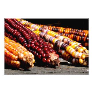 Indian Corn Photo Print